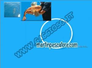 Charter Martin Pescatore